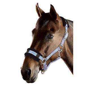 Pferdchenhalfter Exklusiv mit Kunstfell